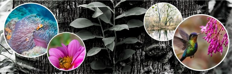 Header image depicting symbiosis in nature